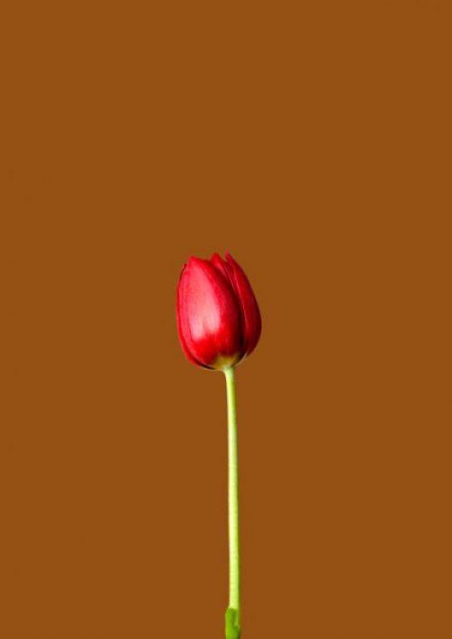 Natural Mocha - Red