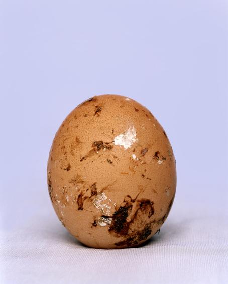 doz egg - 7